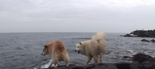И в дождь, и в ветреный день пес стойко переносил страдания, не отходя от воды. И однажды люди узнали, почему…