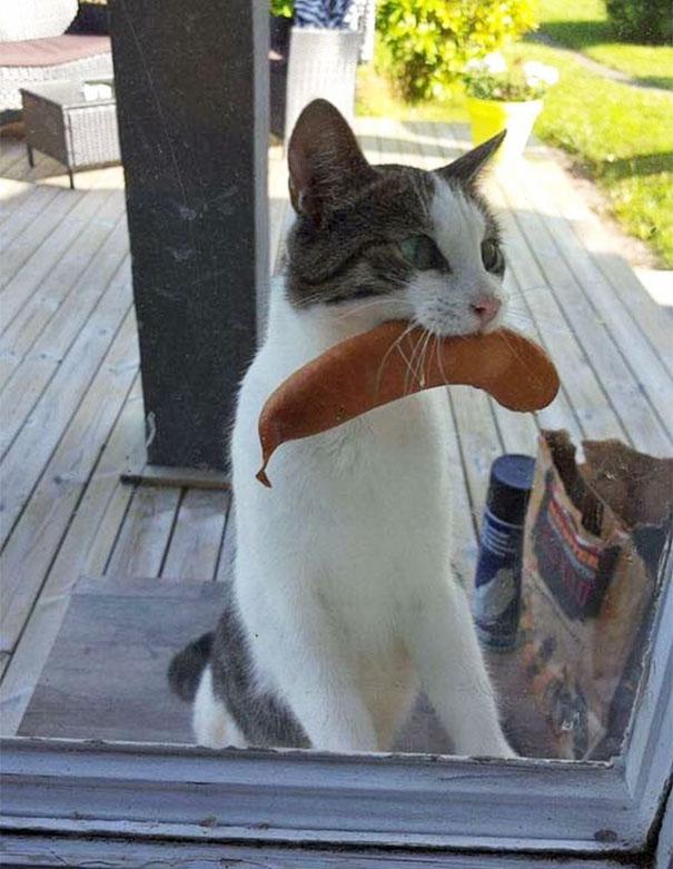 Дама в недоумении — неужели ее кошка в прошлой жизни была француженкой?