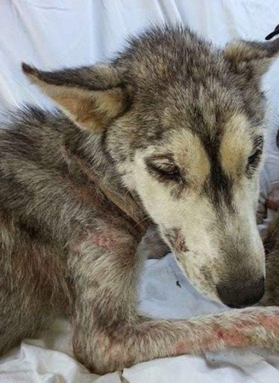 На асфальте лежал породистый пёс, скрывая под животом сокровище… Он почти ушёл на радугу, но вдруг