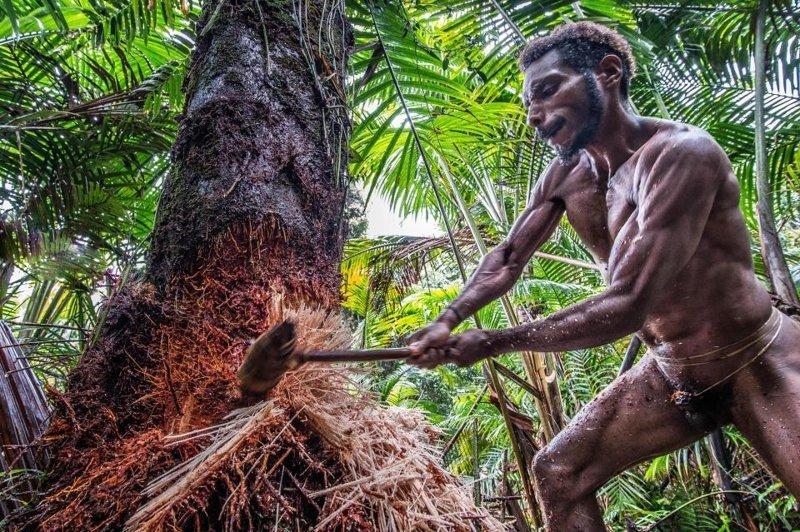 Древнее племя вымирает из-за миссионеров дикое племя, индонезия, интересно, новая гвинея, племя короваи, познавательно, тропой предков, этнография