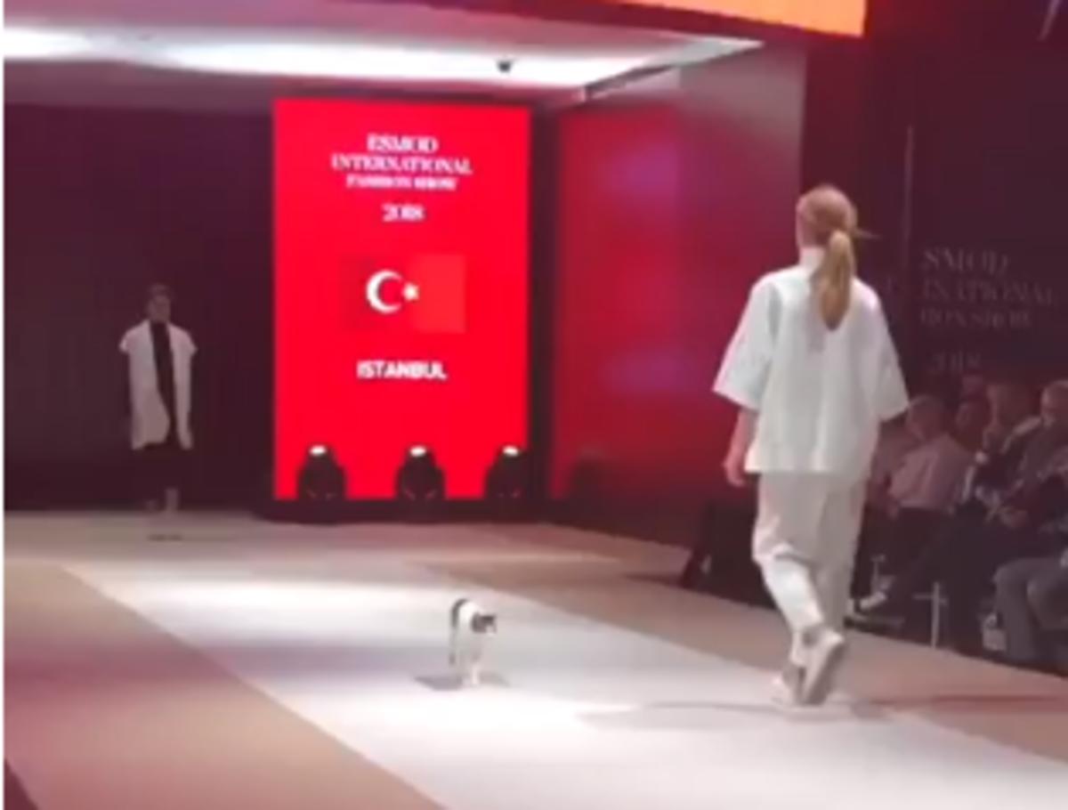 «Модель года»: кошка прошлась по подиуму на модном показе