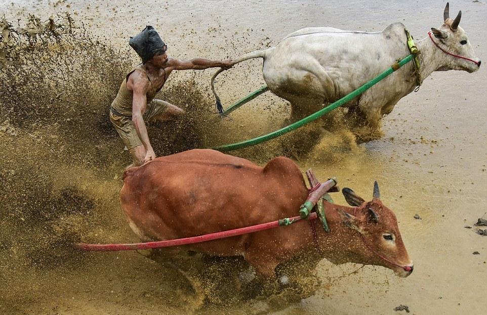 Прикольные картинки быками