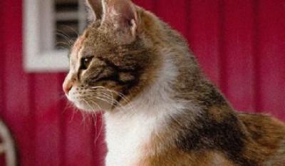 Мама-кошка любила своих котя…