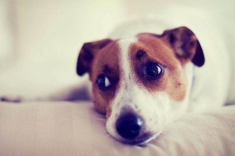 Владельцев собаки заклеймили бессердечными и жестокими после того, как они рассказали, почему хотят ее продать