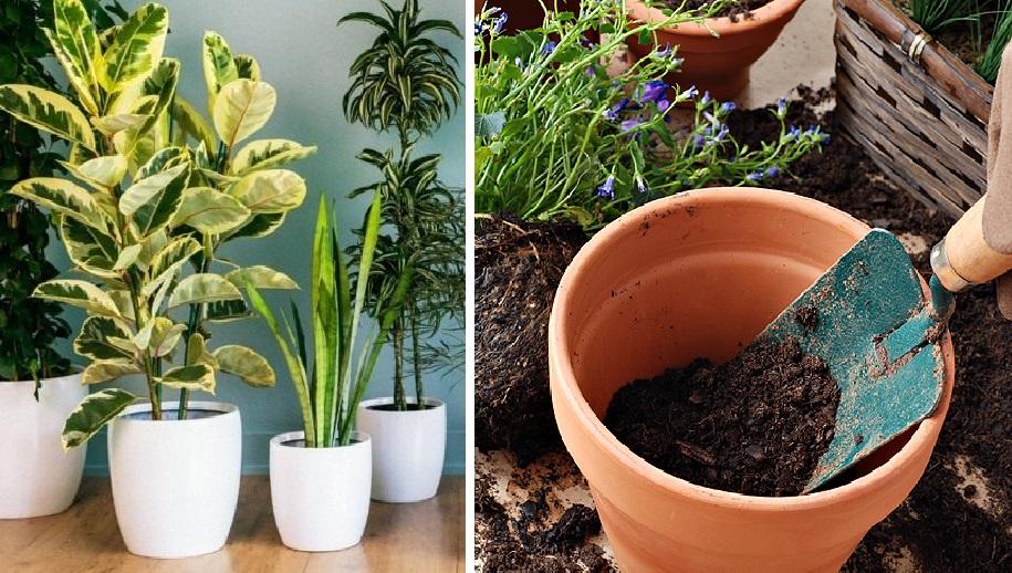 Растут как на дрожжах: натуральная подкормка, которая понравится любым растениям