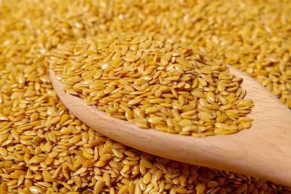 Семя льна: полезные свойства и противопоказания