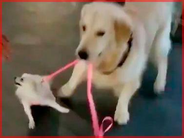 Пёс украл пса!
