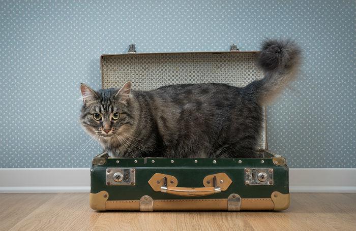 «Мы везем с собой кота»: как взять питомца в отпуск