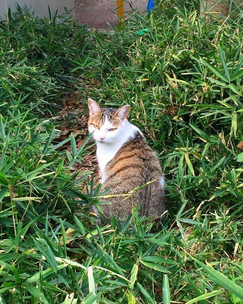 Фотограф, ты что-то как-то невовремя подоспел кот, коты, опасный кот, прикол, суровый