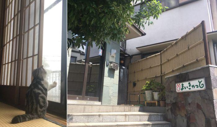Японский отель, в котором можно взять кота в аренду