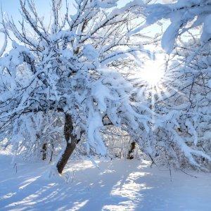 САД, ЦВЕТНИК И ОГОРОД. Зимнему саду вредят мороз и солнце