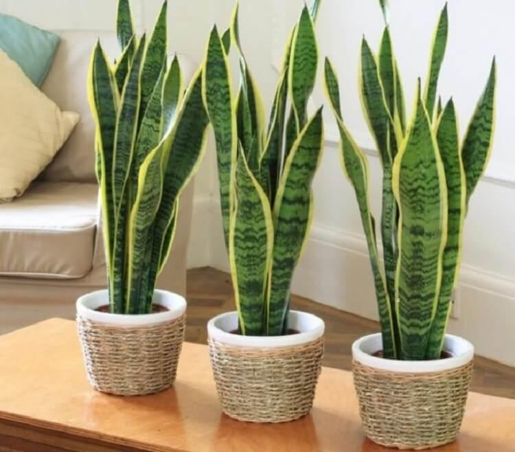 Эти растения – кислородные бомбы! Хотя бы один должен быть в вашем доме!