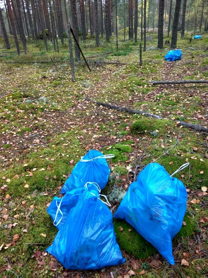 коров фото уборки леса елка