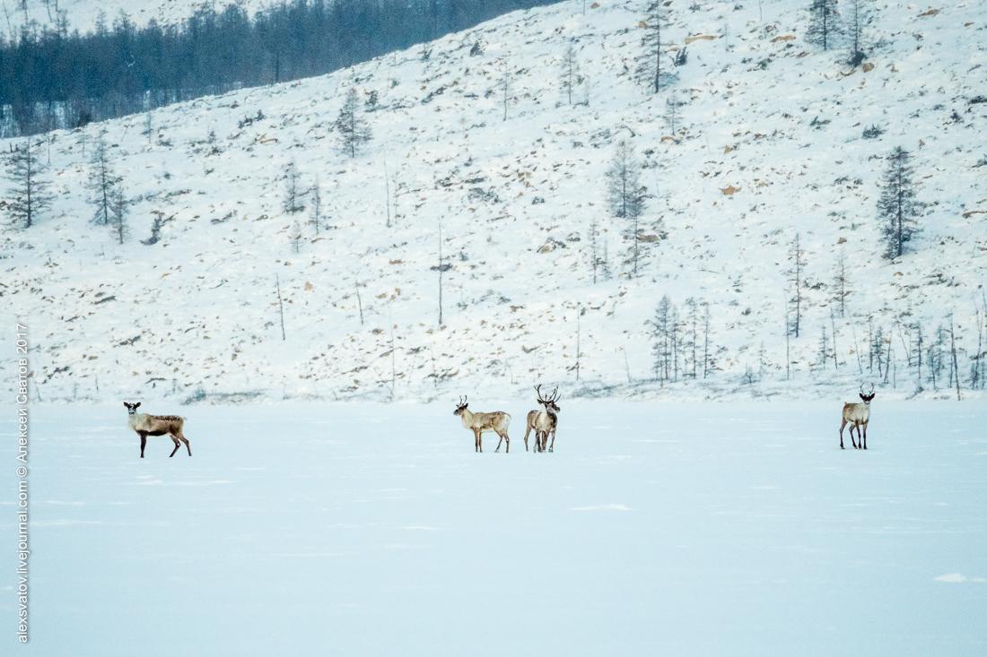 Озеро Амут: За оленями для Деда Мороза