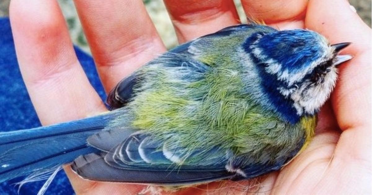 Необыкновенной красоты птица приземлилась ей прямо в ладонь… Но зачем?!