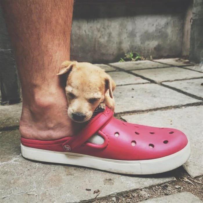 Бездомный щенок никому не был нужен, но пара из Киева подарила ему «звёздную»жизнь