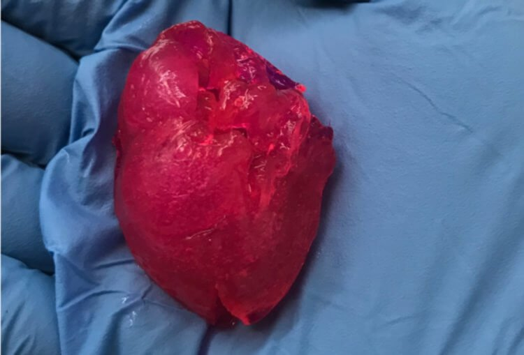 В Чикаго напечатали человеческое мини-сердце будущее,наука