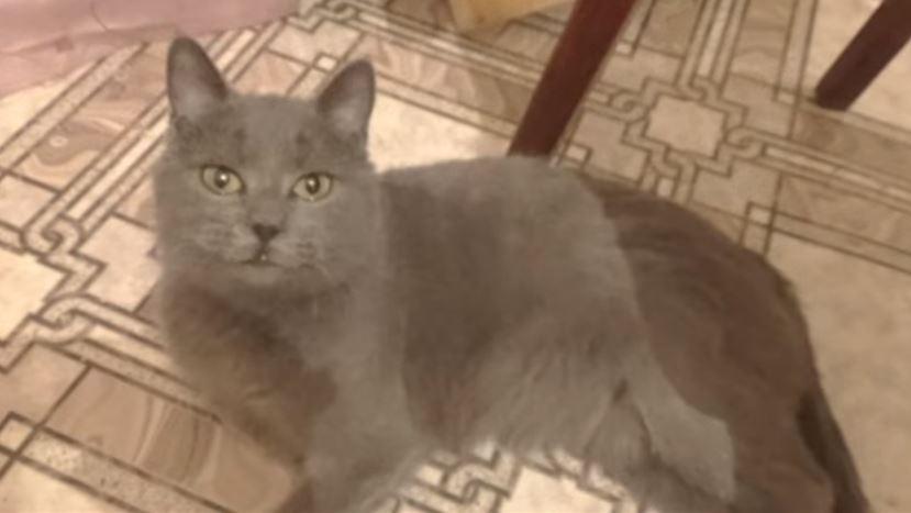 «Приютили очень больную и беременную кошку — оказалось, что мы ошиблись!»