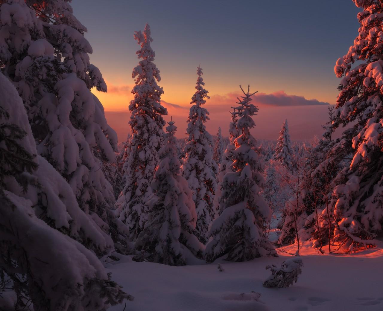 Работа легенды зимнего леса. Фотограф marateaman