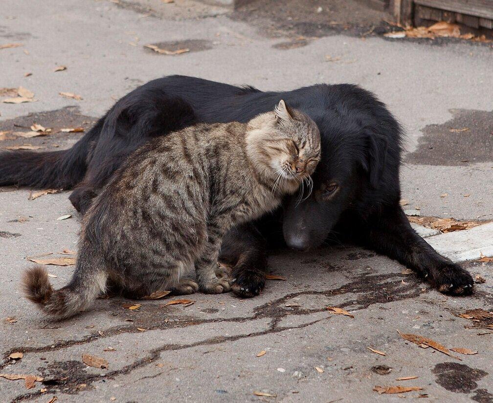 Кот ещё вчера дрался под забором и строил всех вокруг, а теперь как ни в чём не бывало нежится под тёплой шерстью бродяги пса