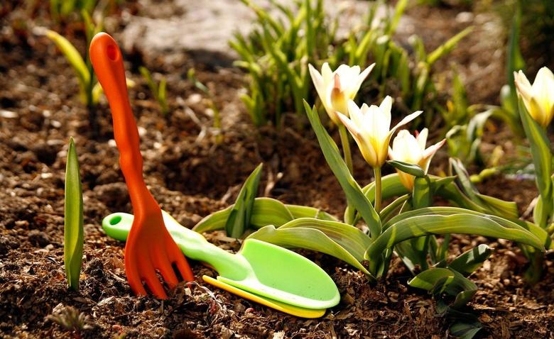 5 основных действий в весеннем саду