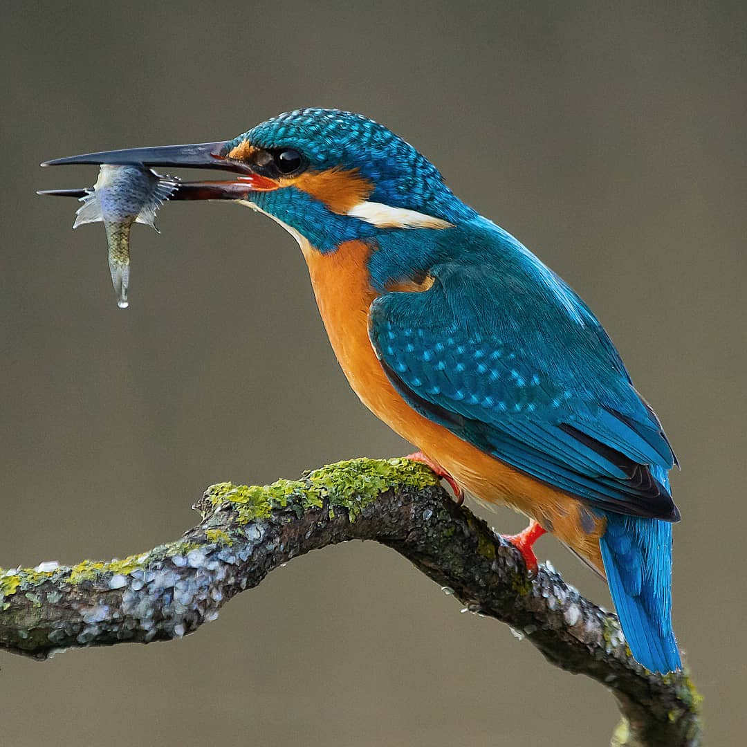 мой мир фото птиц это