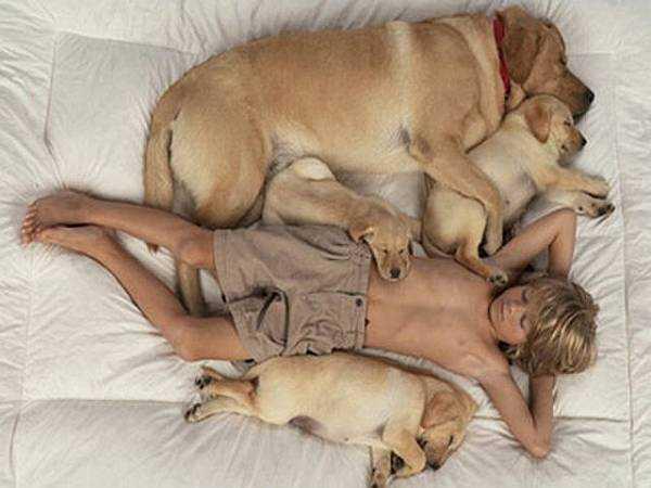 Чем можно заразиться от домашних животных…