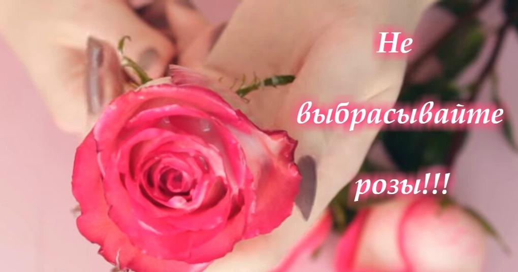 Не выбрасывайте красивые розы! Продлеваем жизнь цветам