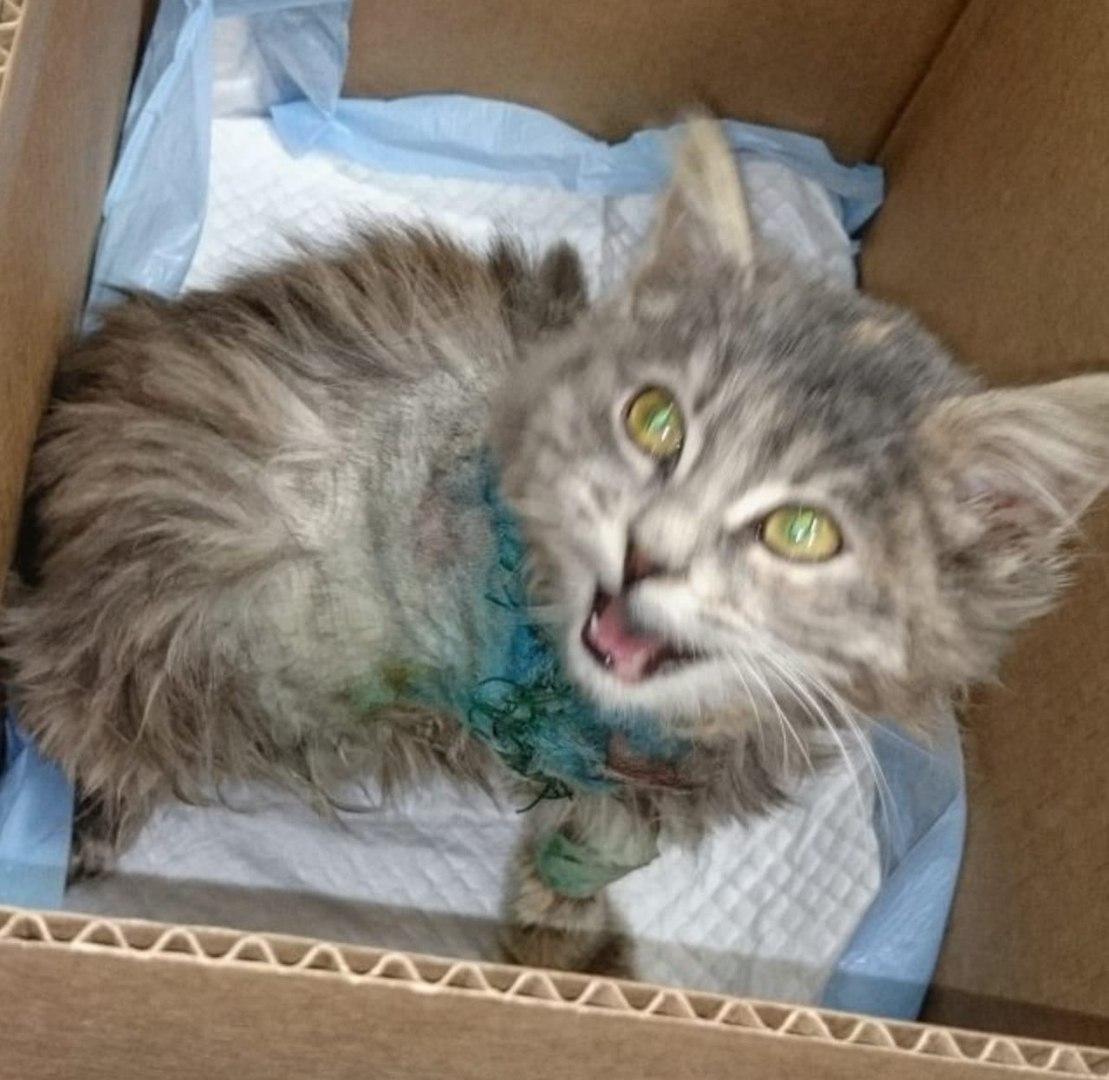 Я подобрала котенка… Трогательная история спасения