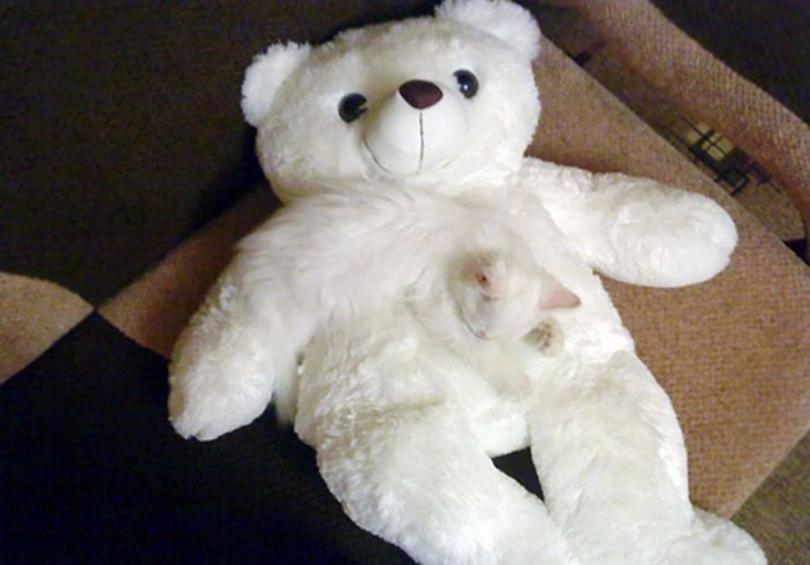 Найди кота: хитрые усатые-полосатые, которых невозможно найти на фото
