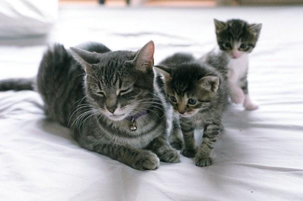 Дайте маме передохнуть животные, мамочки