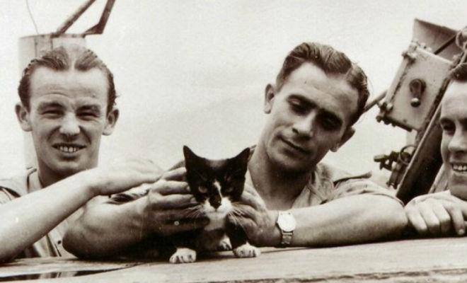 Моряки подняли в море кота и только на берегу узнали его историю: за время войны кот сменил 3 корабля
