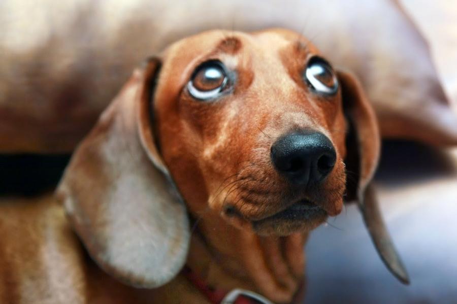 Рогозин и собака: у кого организм сложнее?