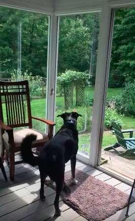 Пёс поймал птицу, залетевшую в дом, а потом выбежал на улицу, чтобы отпустить её не всё так грустно