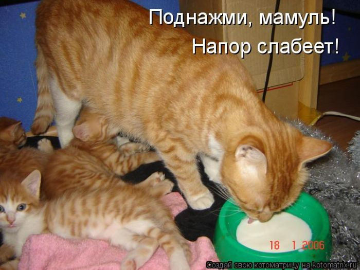 Днем рождения, картинки с надписями смешные кошки и котята и коты до слез