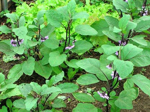 Внекорневая подкормка поможет развитию растений