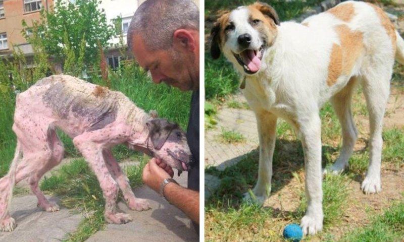15. Больной бездомный пёс полностью преобразился после того, как это болгарская пара забрала его к себе и назвала Калиси. Теперь он довольная собака в мире, добро, истории, люди, позитив, фото