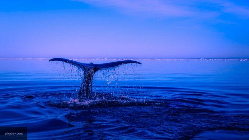 Маленький червь может побороться с китом за звание самого громкого животного в океане
