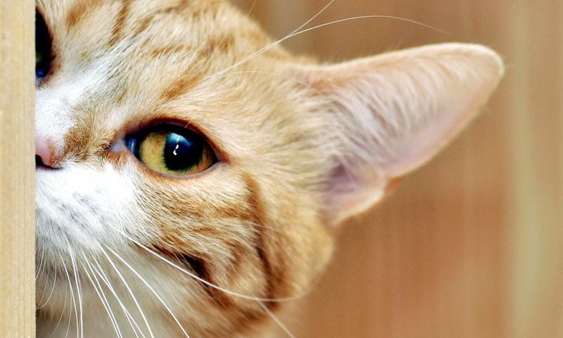 7 вещей, которые невозможно сделать, живя с кошкой