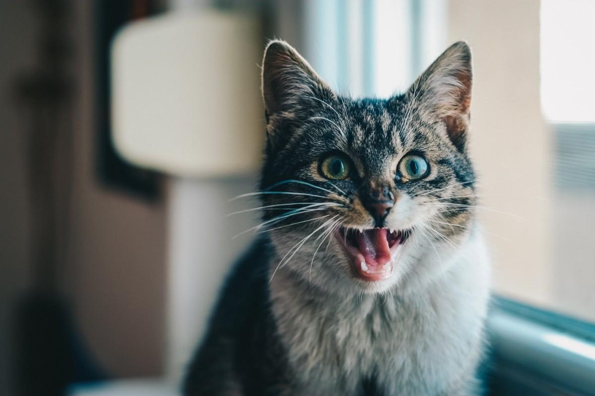 Почти котоламповый радикулит. Фельдшер — о реакции людей и котиков на уколы