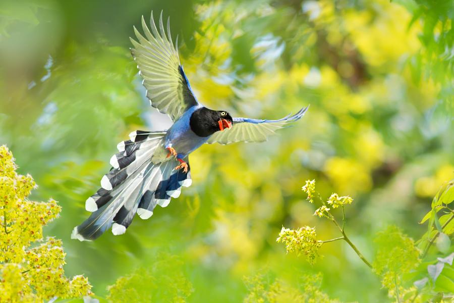 ~ Come spread your wings ~, автор — FuYi Chen на 500px.com
