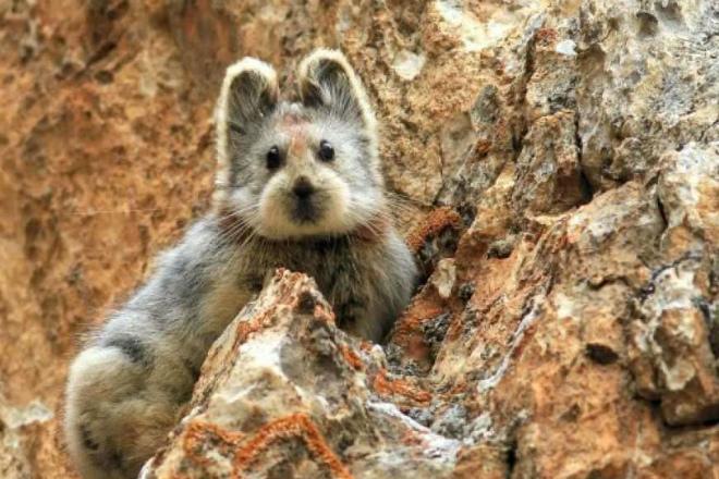 Редчайший волшебный кролик попал на видео в китайских горах
