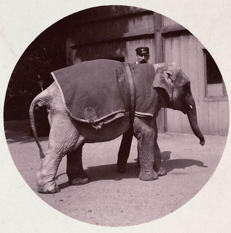 Первая компактная камера Kodak №1