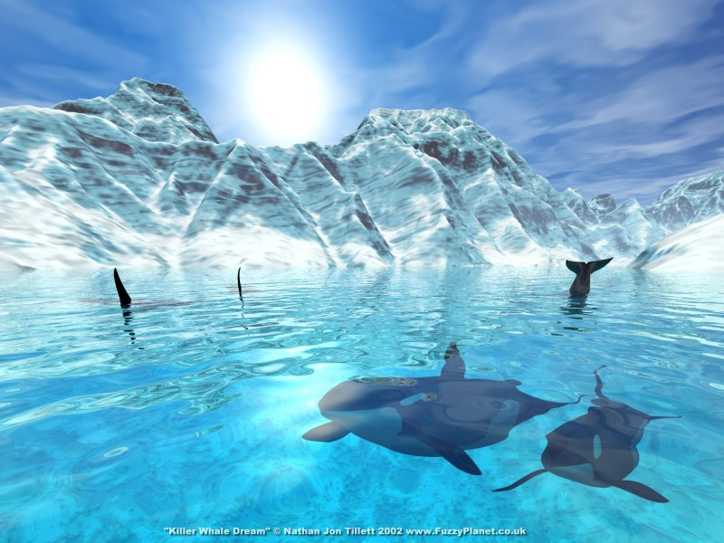 Killer_Whale_Dream_by_Fuzzy_800x600.jpg0