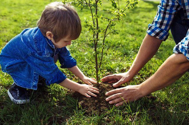 Откуда стереотип про «построить дом, посадить дерево и вырастить сына»?