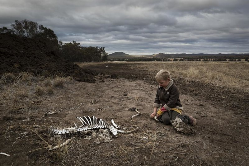 Эта фотография скелета кенгуру показывает жестокую реальность австралийской засухи ynews, австралия, в мире, жутко, засуха, кенгуру, новости, планета в опасности