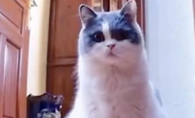 Мужчина оставил дома кошку и звонил каждый день по видео. Когда он не позвонил, кошка всю ночь просидела перед камерой
