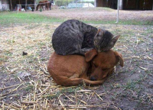 — Ой, ну и собаку купили… Иди сюда, горемыка, пожалею! (20 ФОТО)