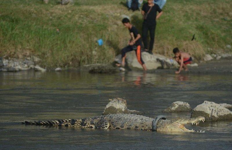 Крокодил живёт с ошейником из покрышки, и из-за его фото мы вновь теряем веру в человечество