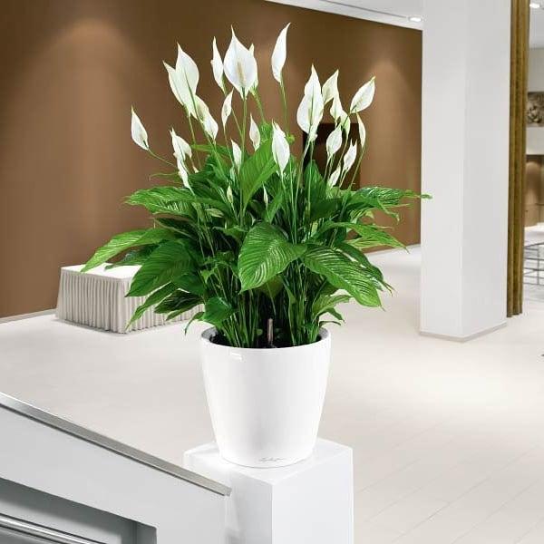 Популярные цветы в доме для счастья, букета под